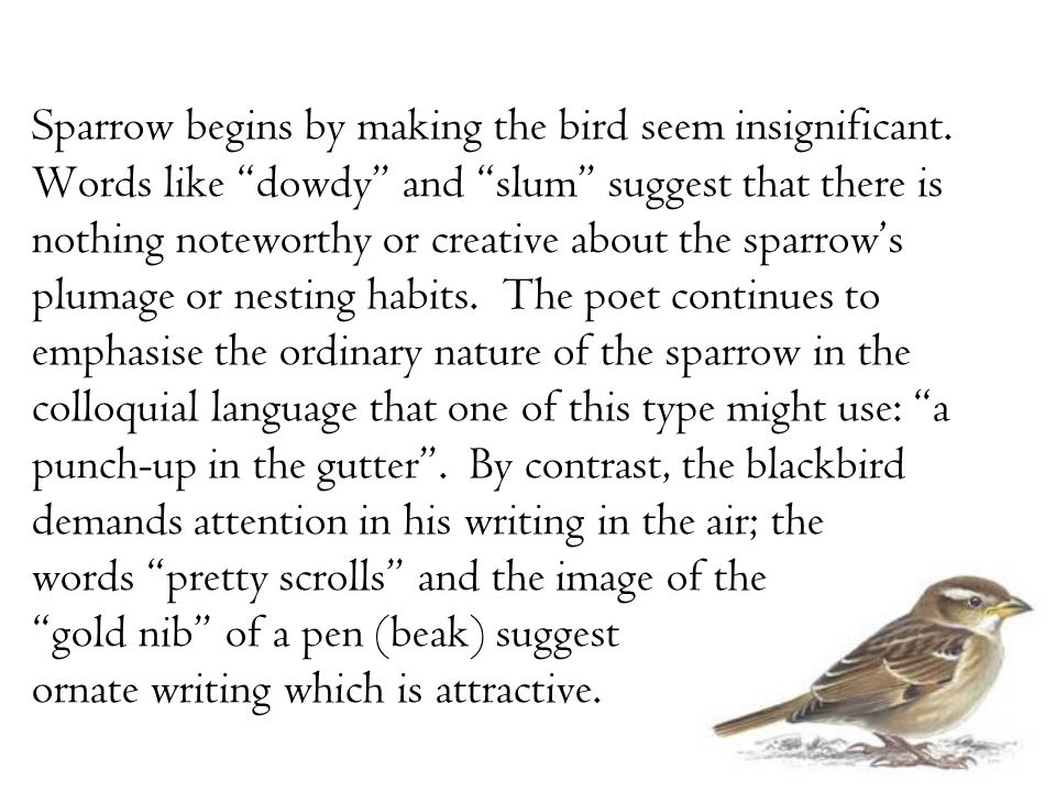 "Sparrow begins by making the bird seem insignificant. Words like ""dowdy"" and ""slum"" suggest that there is nothing noteworthy or creative about the spa"