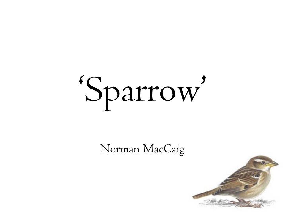 'Sparrow' Norman MacCaig