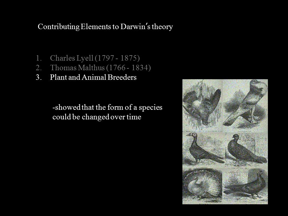 Contributing Elements to Darwin's theory 1.Charles Lyell (1797 - 1875) 2.Thomas Malthus (1766 - 1834) 3.Plant and Animal Breeders -showed that the form of a species could be changed over time