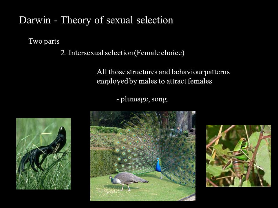 Darwin - Theory of sexual selection Two parts 2.