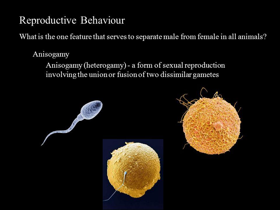 Reproductive Behaviour Sex ratio -why 1:1.