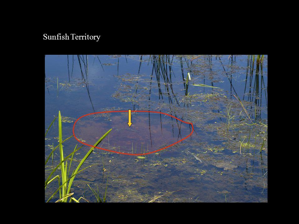 Sunfish Territory