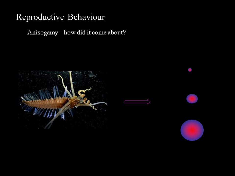 Reproductive Behaviour Anisogamy – how did it come about