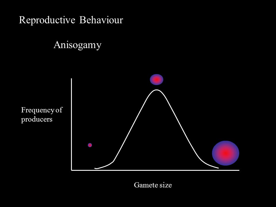 Reproductive Behaviour Gamete size Frequency of producers Anisogamy