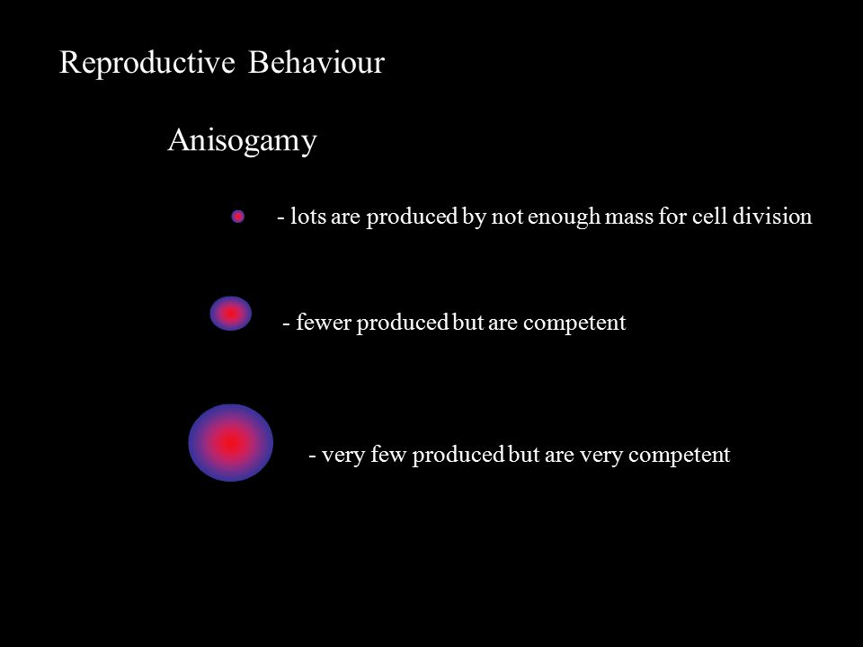 Reproductive Behaviour Anisogamy - lots are produced by not enough mass for cell division - very few produced but are very competent - fewer produced but are competent