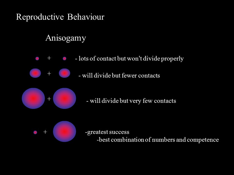 Reproductive Behaviour Anisogamy - lots of contact but won't divide properly - will divide but very few contacts - will divide but fewer contacts + + + + -greatest success -best combination of numbers and competence
