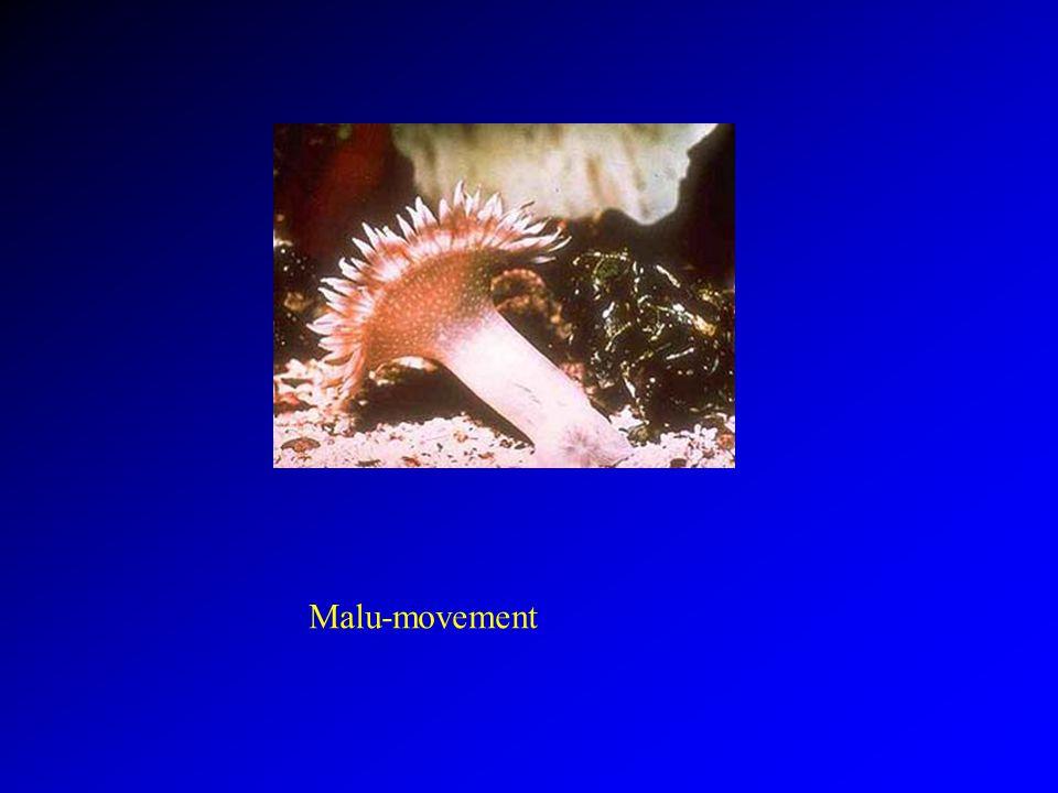 Malu-movement
