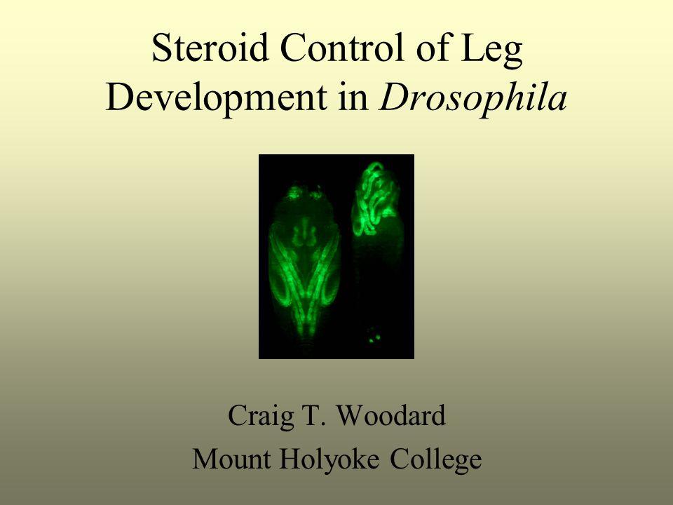 Steroid Control of Leg Development in Drosophila Craig T. Woodard Mount Holyoke College