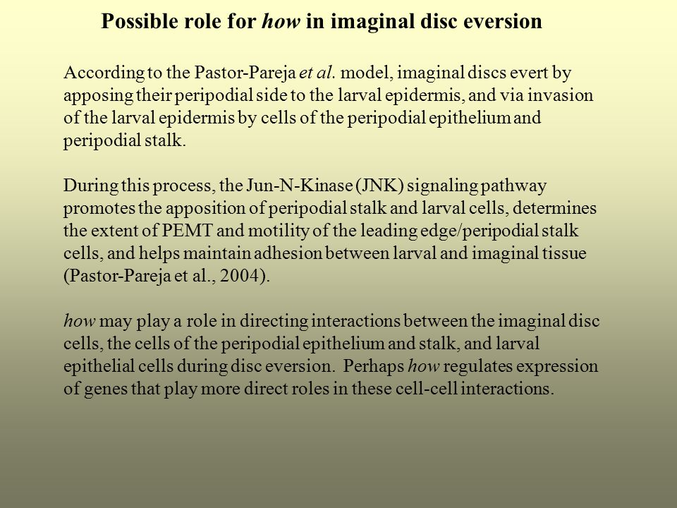 Possible role for how in imaginal disc eversion According to the Pastor-Pareja et al. model, imaginal discs evert by apposing their peripodial side to
