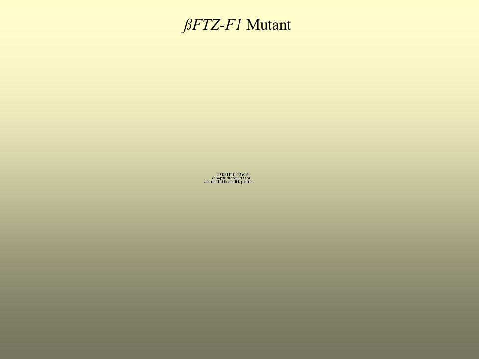 ßFTZ-F1 Mutant