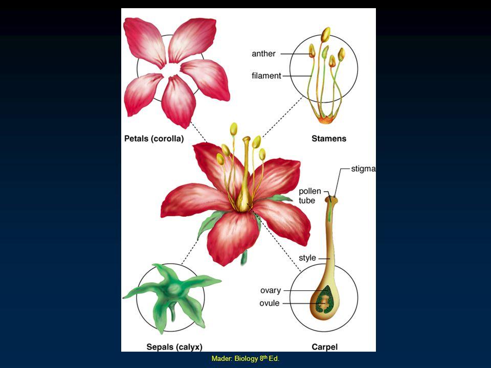 Mader: Biology 8 th Ed.