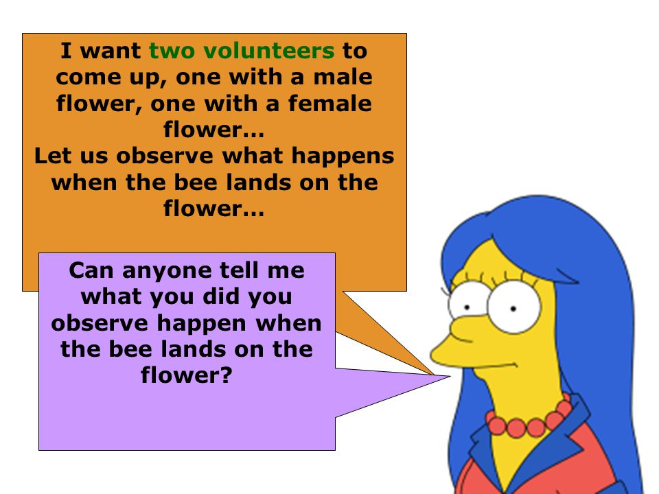 I want two volunteers to come up, one with a male flower, one with a female flower… Let us observe what happens when the bee lands on the flower… Can