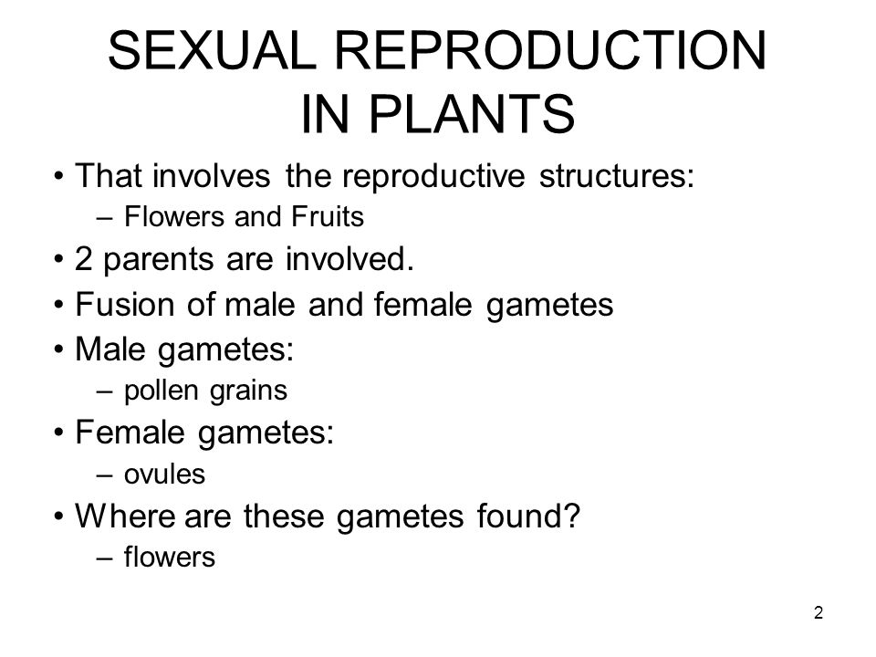 2 That involves the reproductive structures: –Flowers and Fruits 2 parents are involved. Fusion of male and female gametes Male gametes: –pollen grain