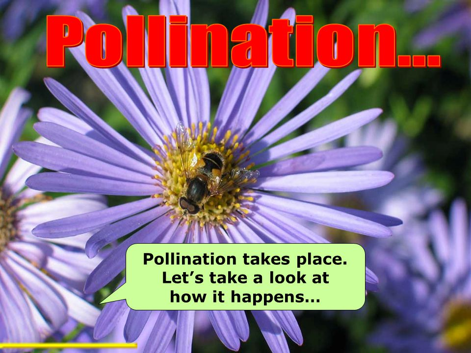 Pollination takes place. Let's take a look at how it happens…
