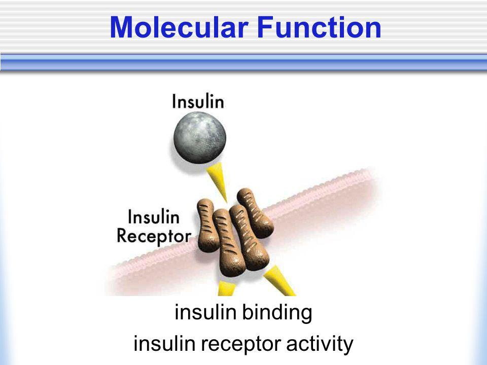 Molecular Function insulin binding insulin receptor activity
