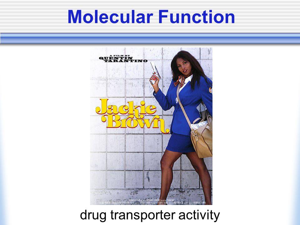 Molecular Function drug transporter activity