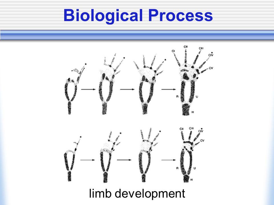 Biological Process limb development