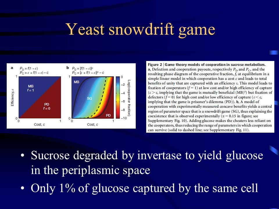 Yeast snowdrift game Sucrose degraded by invertase to yield glucose in the periplasmic space Only 1% of glucose captured by the same cell