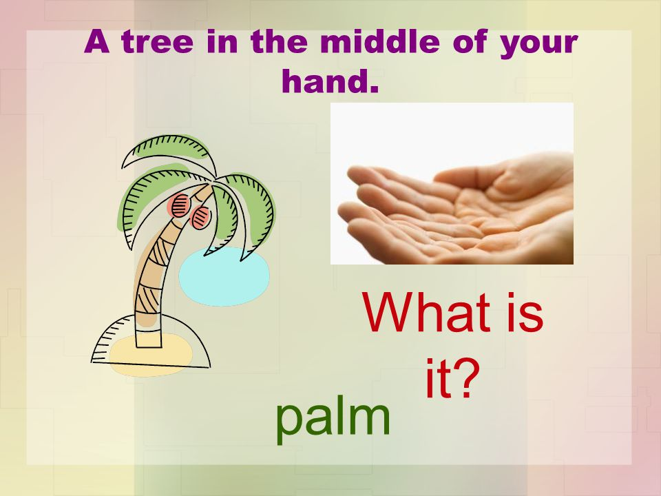 A tree in the middle of your hand. palm What is it