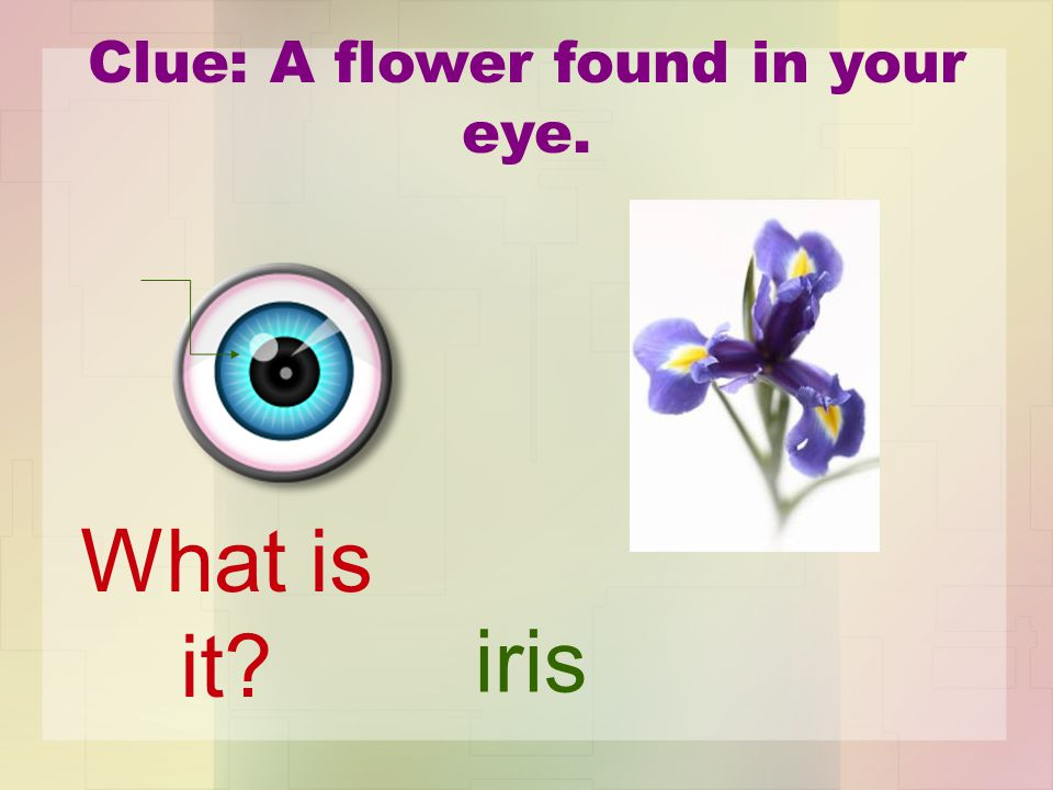 Clue: A flower found in your eye. iris What is it