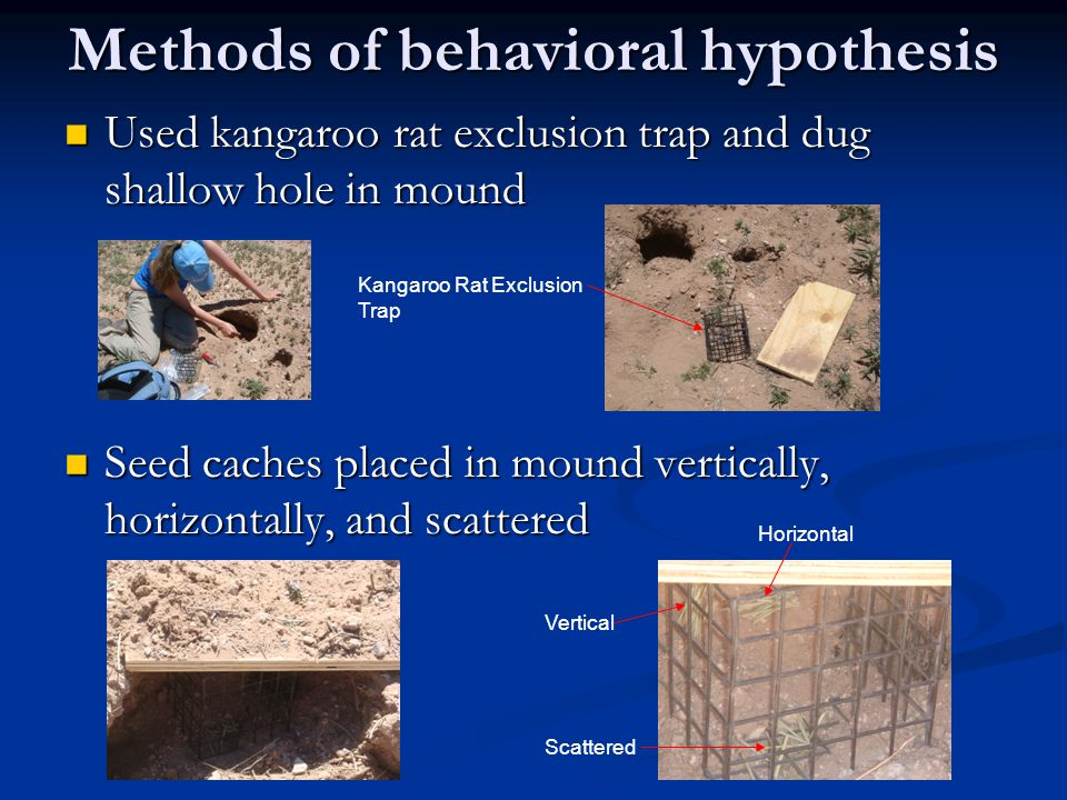 Methods of behavioral hypothesis Used kangaroo rat exclusion trap and dug shallow hole in mound Used kangaroo rat exclusion trap and dug shallow hole in mound Seed caches placed in mound vertically, horizontally, and scattered Seed caches placed in mound vertically, horizontally, and scattered Kangaroo Rat Exclusion Trap Vertical Horizontal Scattered