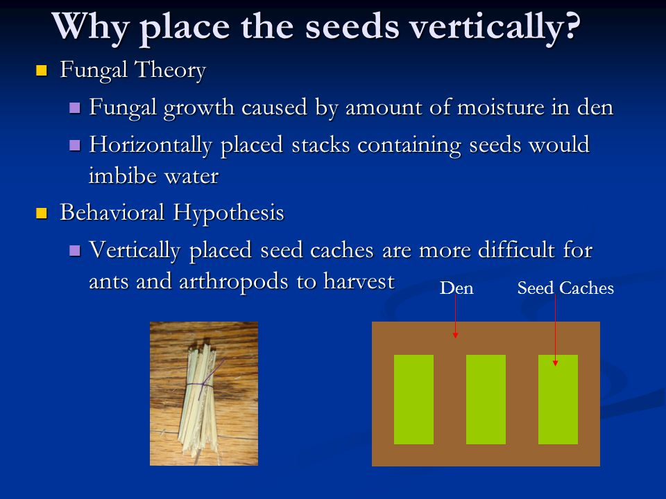 Why place the seeds vertically.