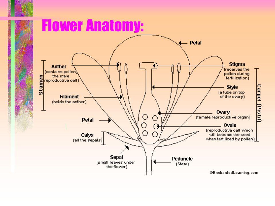 Flower Anatomy: