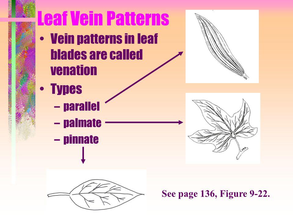 Leaf Vein Patterns Vein patterns in leaf blades are called venation Types –parallel –palmate –pinnate See page 136, Figure 9-22.