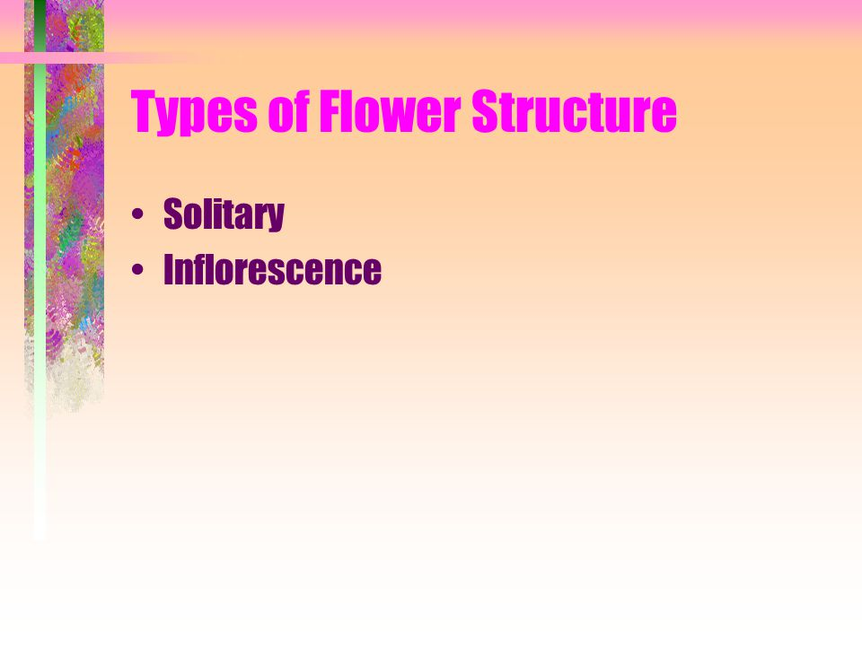 Types of Flower Structure Solitary Inflorescence