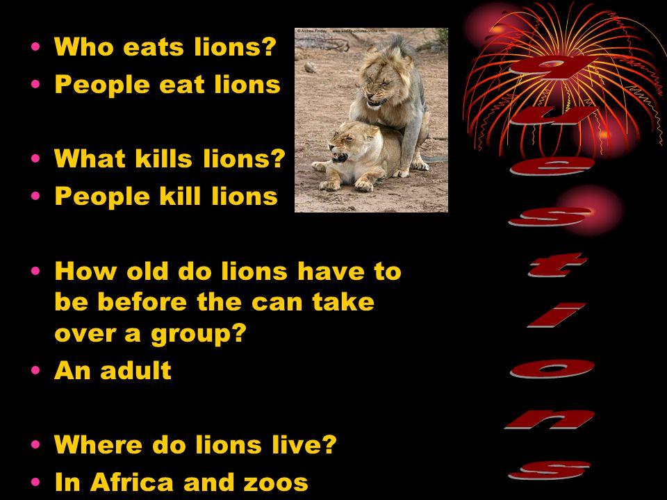 How do lions hunt.