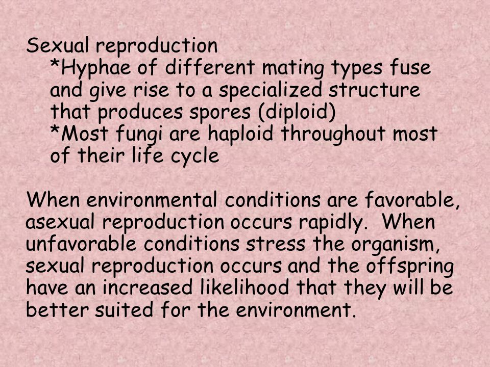 Sexual reproduction *Hyphae of different mating types fuse and give rise to a specialized structure that produces spores (diploid) *Most fungi are hap