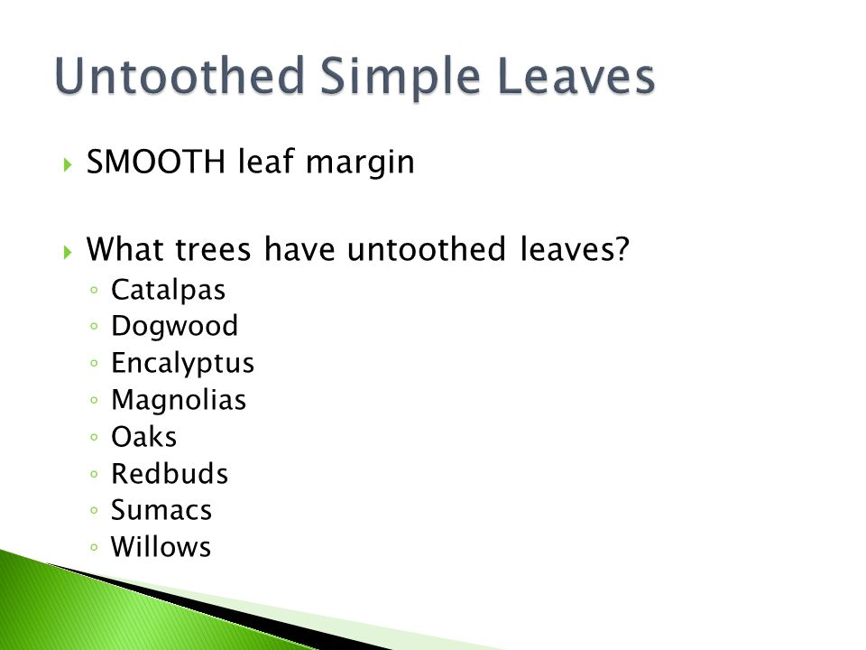  SMOOTH leaf margin  What trees have untoothed leaves.