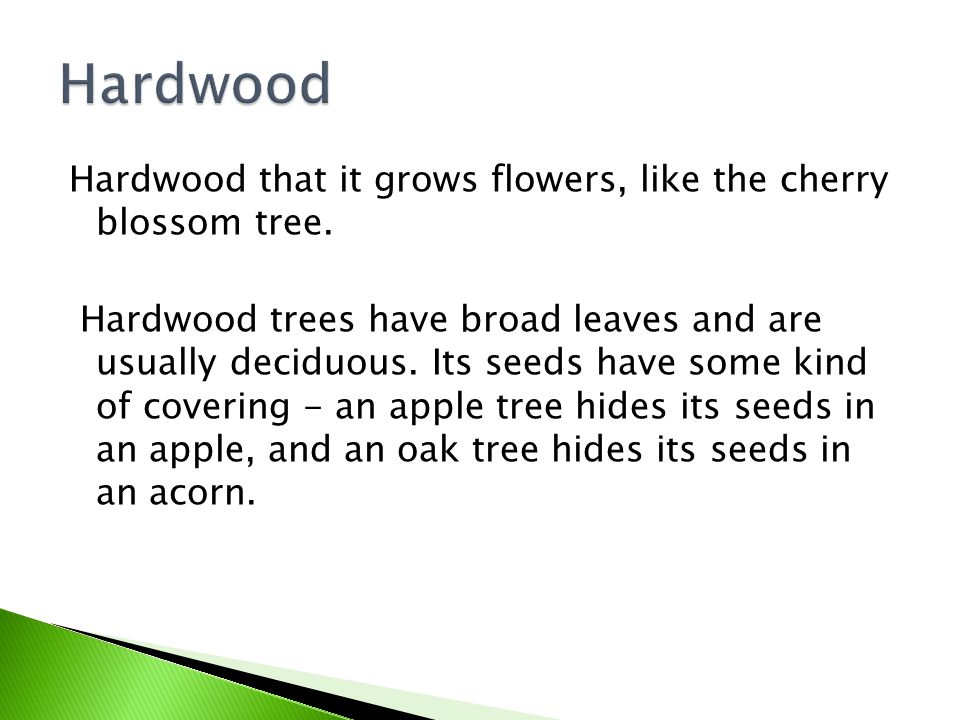 Hardwood that it grows flowers, like the cherry blossom tree.