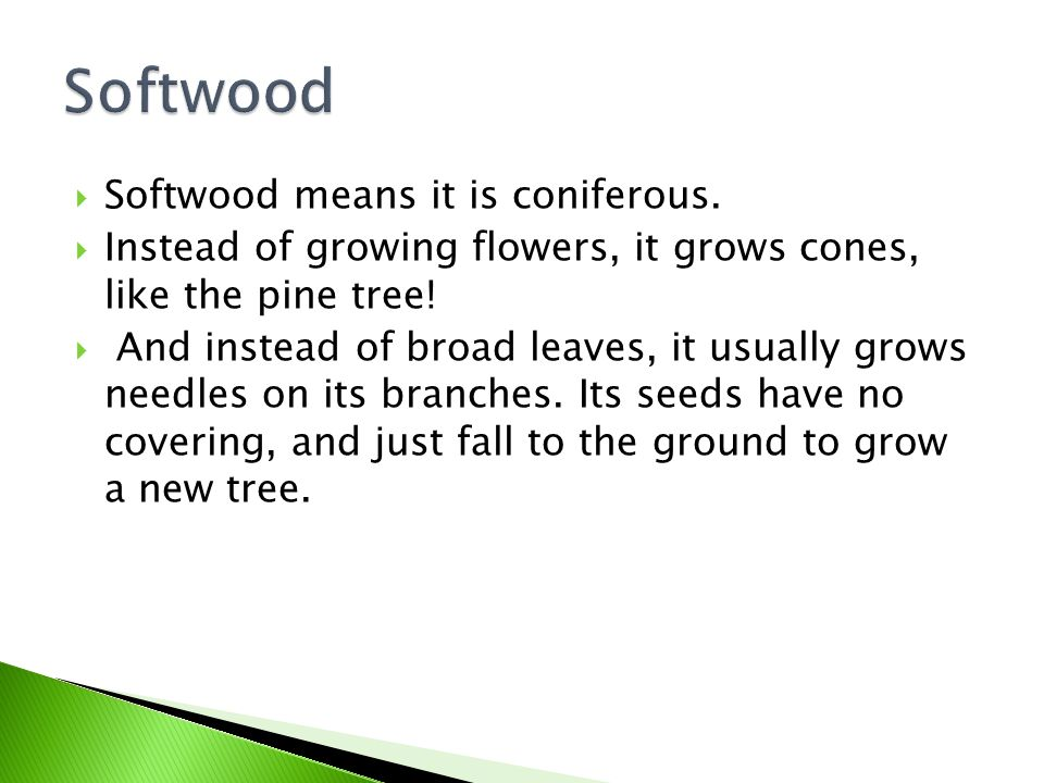  Softwood means it is coniferous.