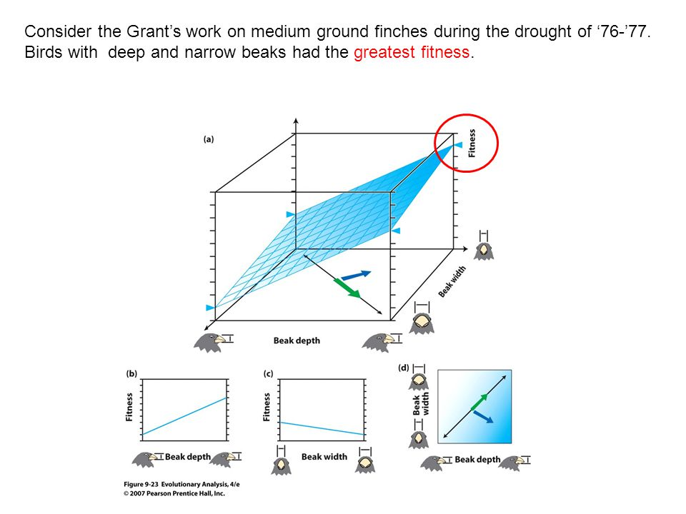 Consider the Grant's work on medium ground finches during the drought of '76-'77.