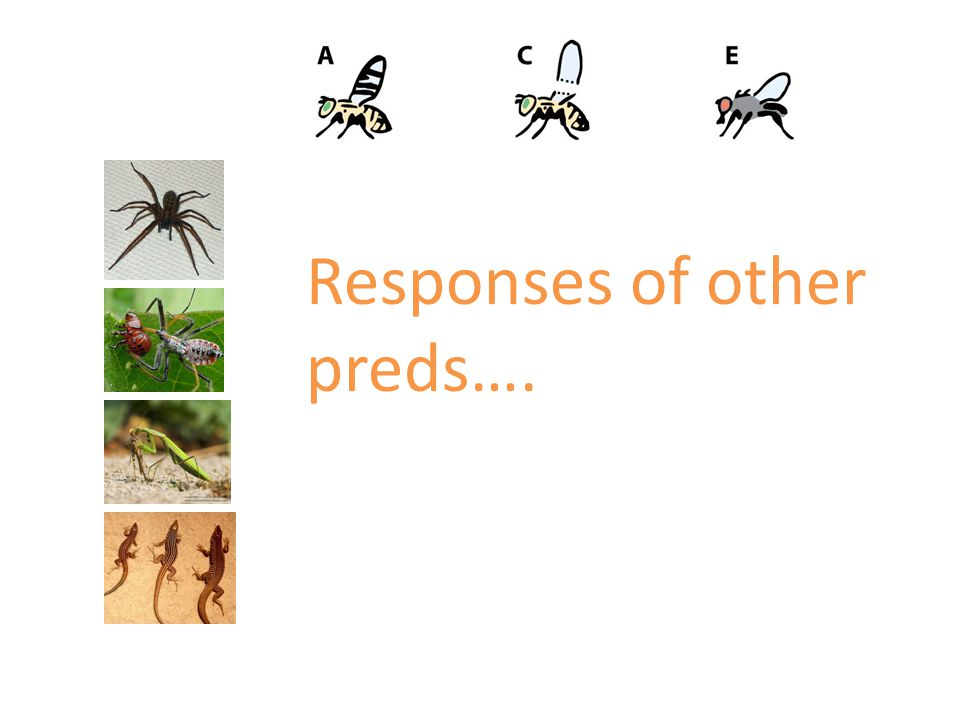 Responses of other preds….