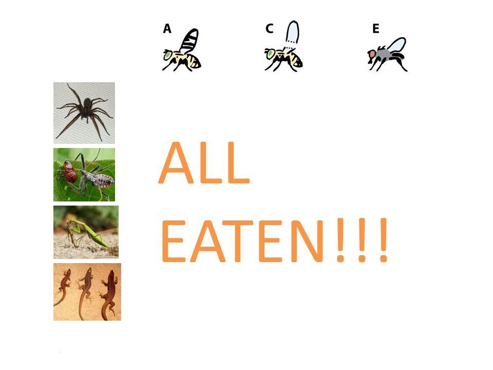 ALL EATEN!!!