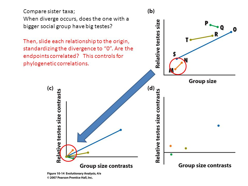 Compare sister taxa; When diverge occurs, does the one with a bigger social group have big testes.