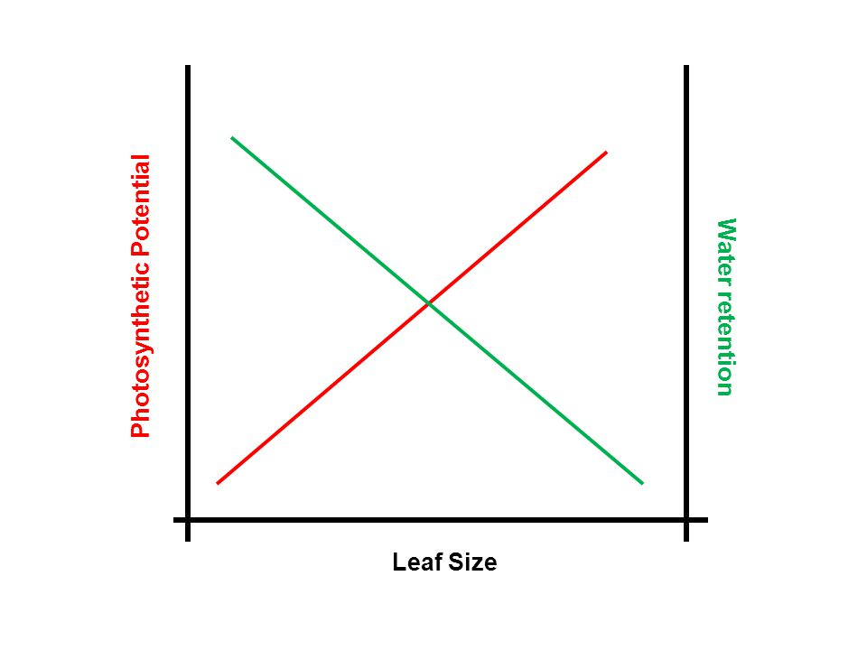 Leaf Size Photosynthetic Potential Water retention