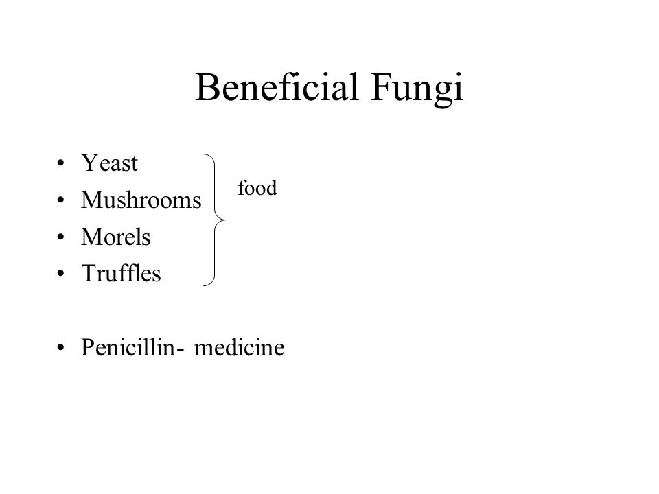 Beneficial Fungi Yeast Mushrooms Morels Truffles Penicillin- medicine food