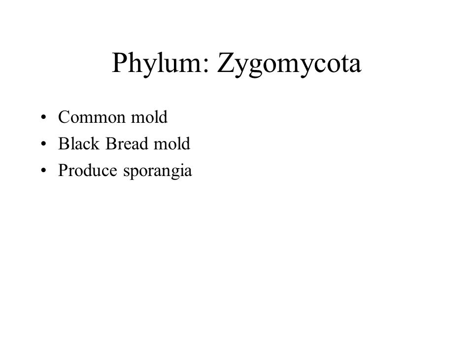 Phylum: Zygomycota Common mold Black Bread mold Produce sporangia