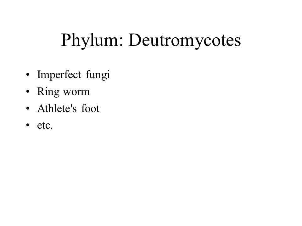 Phylum: Deutromycotes Imperfect fungi Ring worm Athlete s foot etc.