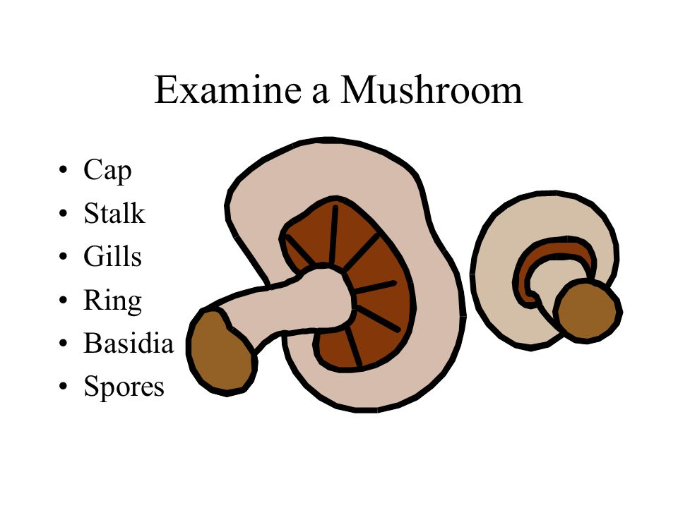 Examine a Mushroom Cap Stalk Gills Ring Basidia Spores
