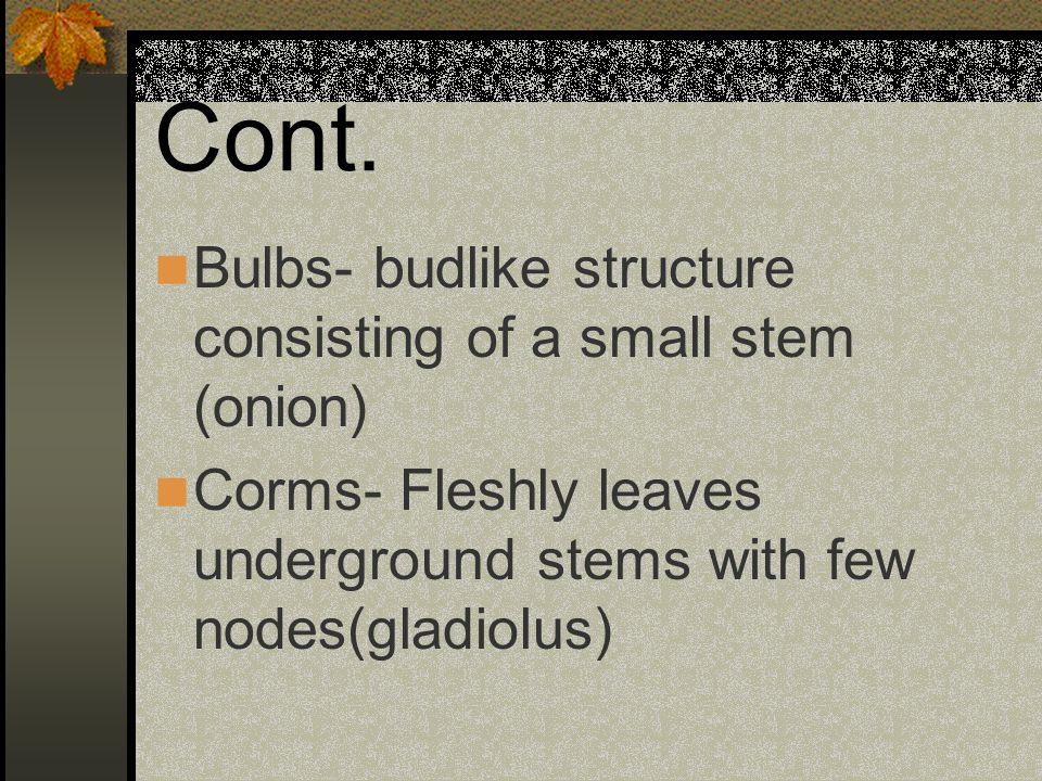 Cont. Bulbs- budlike structure consisting of a small stem (onion) Corms- Fleshly leaves underground stems with few nodes(gladiolus)
