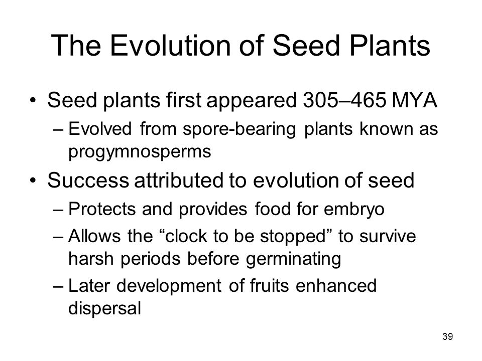The Evolution of Seed Plants Seed plants first appeared 305–465 MYA –Evolved from spore-bearing plants known as progymnosperms Success attributed to e