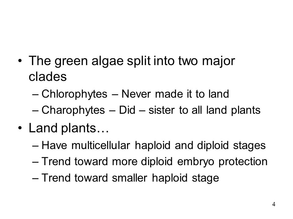 The green algae split into two major clades –Chlorophytes – Never made it to land –Charophytes – Did – sister to all land plants Land plants… –Have mu