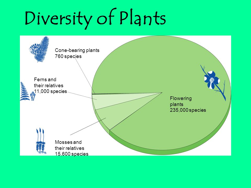 Flowering plants 235,000 species Cone-bearing plants 760 species Ferns and their relatives 11,000 species Mosses and their relatives 15,600 species Diversity of Plants