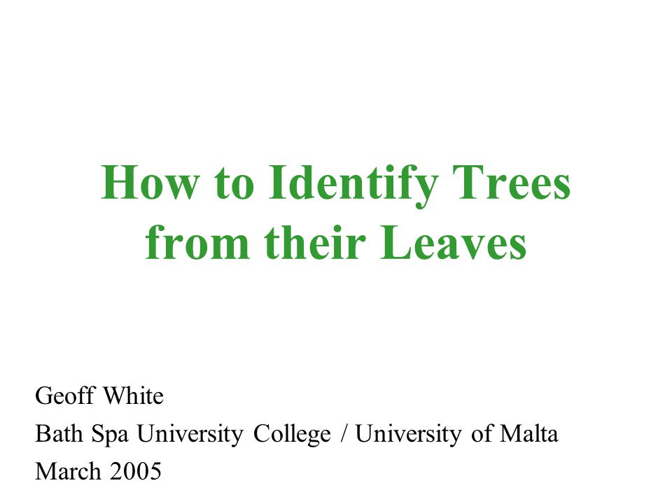 How to Identify Trees from their Leaves Geoff White Bath Spa University College / University of Malta March 2005