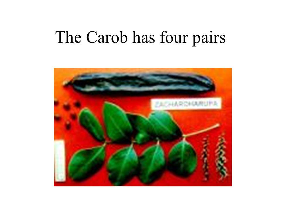 The Carob has four pairs