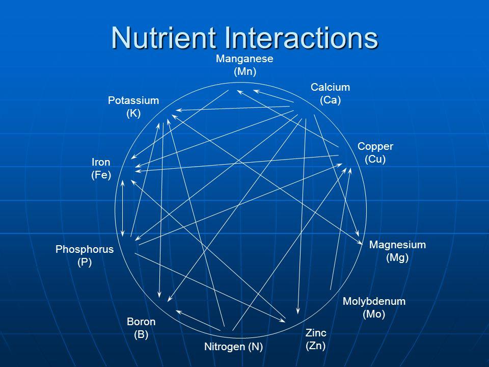 Nutrient Interactions Copper (Cu) Calcium (Ca) Manganese (Mn) Potassium (K) Iron (Fe) Phosphorus (P) Boron (B) Nitrogen (N) Zinc (Zn) Magnesium (Mg) Molybdenum (Mo)